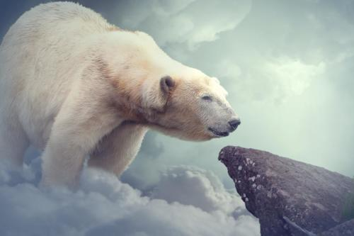 ours polaire géant
