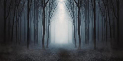 foret sombre